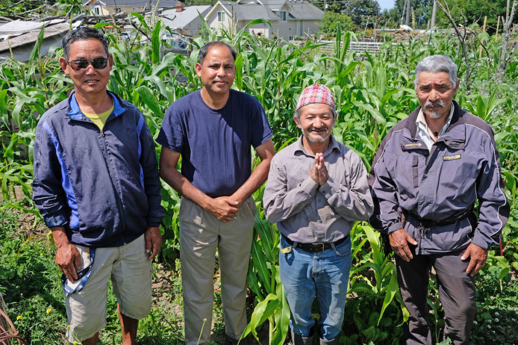 Four growers stand in their garden.